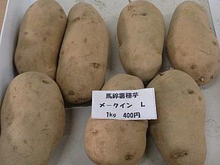 メークインの種芋