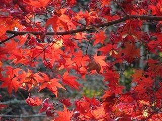 紅葉-紅葉谷公園-