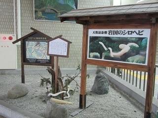 JR新岩国駅
