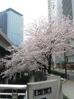 千代田区の桜-2017-